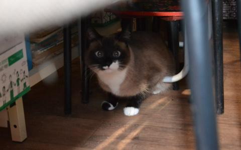 Новости мира: Кот из Великобритании спас жизнь своей больной хозяйке