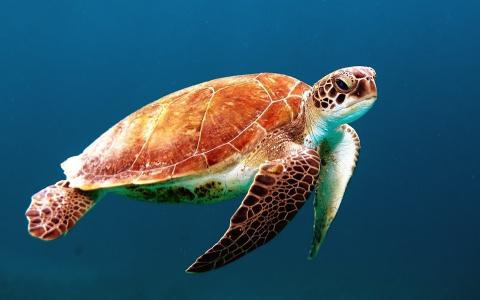 Ученые сообщили, что Мировой океан окрасится в яркие цвета