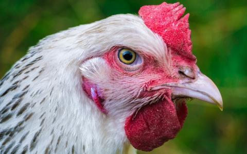 В Пензенской области раскрыт заговор «яйцекартеля»