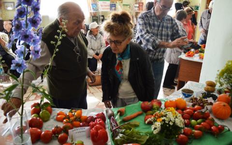 Аномальный урожай в Пензенской области: дачники делятся своими секретами
