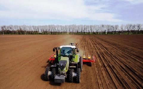 «Перуанские хризантемы» в Пензенской области дали высокий урожай
