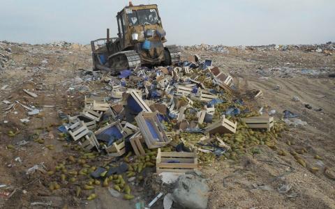В селе Чемодановка Пензенской области уничтожили 15 тысяч груш