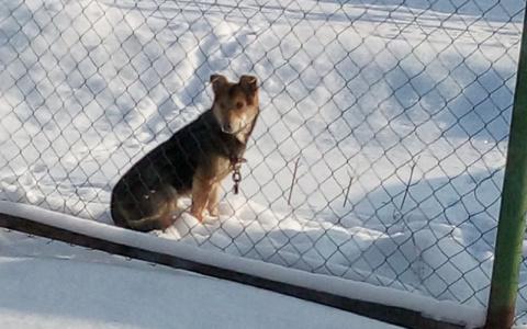 В Пензенской области пропадают собаки