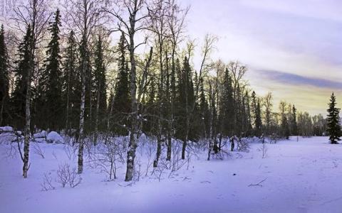 Повешенный на дереве труп нашли в Пензенской области