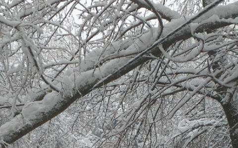 В Пензе под тяжестью снега дерево повисло на проводах