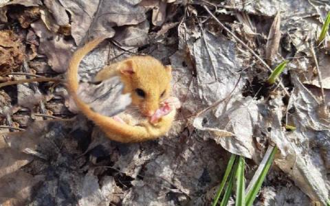 В Мокшанском районе обнаружили редкого зверька