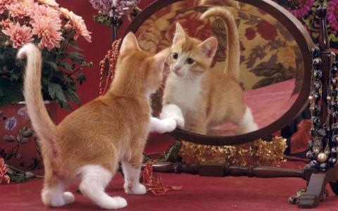 Какие 6 вещей мы делаем перед зеркалом, пока никто не видит? Рассказываем о пензенцах в гифках