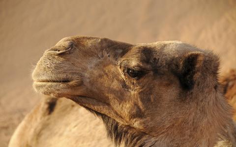 В Пензенской области предпринимателя наказали за плохое отношение к пони и верблюдам