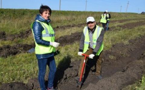 «Кроношпан» высадил более 3000 саженцев липы