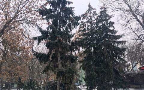 Сильный ветер и теплая погода ожидает пензенцев 2 января