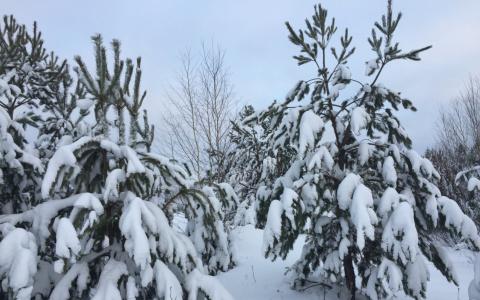 В Пензенской области произойдут изменения в погоде