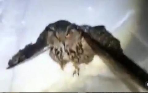 В Пензенской области замечена редкая птица