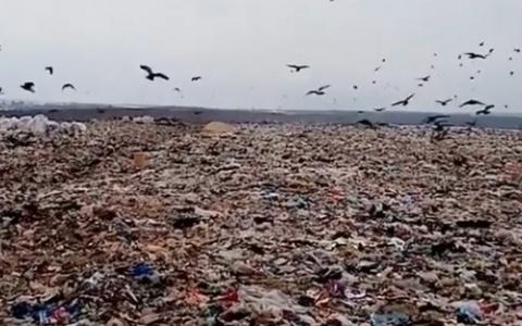 «Запах стабильности»: жители жалуются на огромную свалку под Пензой - видео