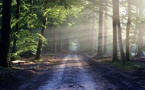 В Пензе остановлены поиски без вести пропавшего 17-летнего парня