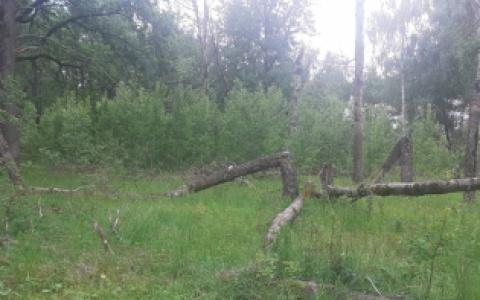 В Пензе выясняют причины смерти мужчины, найденного мертвым в лесу