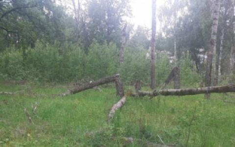 Стали известны подробности поисков пензенца, погибшего в лесу