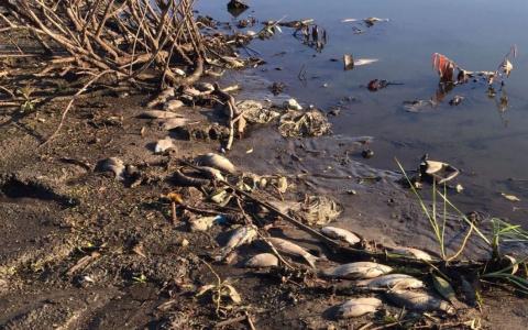 В Пензенской области рыбаки рассказали о «страшном заморе» на пруду