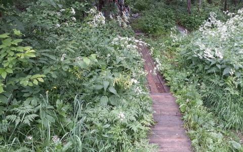 «Нашли в кустах»: в Пензенском районе обнаружили труп пропавшего мужчины