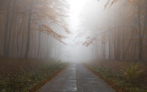 Жителей Пензенской области в понедельник ожидает сильный туман