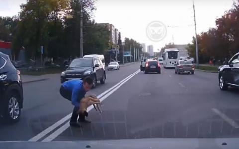 Автоледи в Пензе сбила собаку и оставила ее умирать на дороге