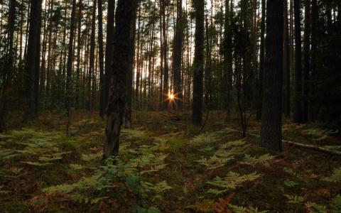 В Пензенской области прекращены поиски пропавшей 45-летней женщины
