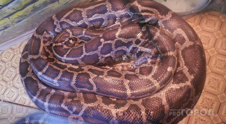 24-летняя пензячка купила питона по звонку: живую змею так и не привезли