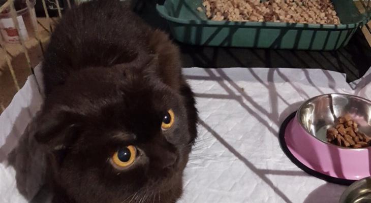 """""""Трижды брошенный и несчастный"""": в Пензе волонтеры борются за жизнь кота"""