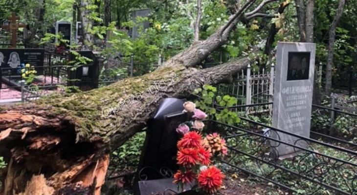 """""""Там ходить опасно"""": в Пензе на кладбище рухнуло дерево и повредило памятники"""