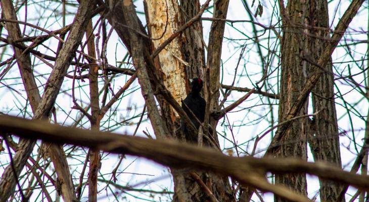 Редкая птица попала в кадр пензенца на Западной поляне