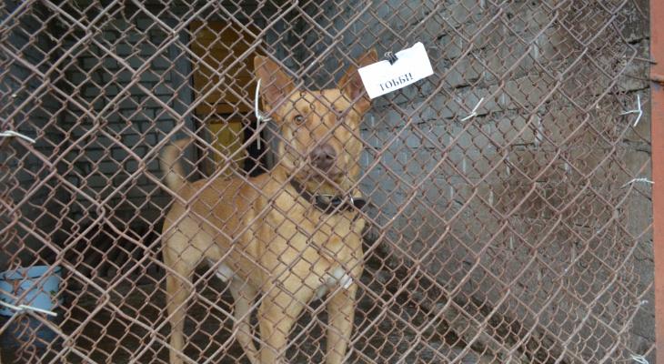 Мы не мусорка животных: приют в Пензе перестал принимать питомцев на лечение