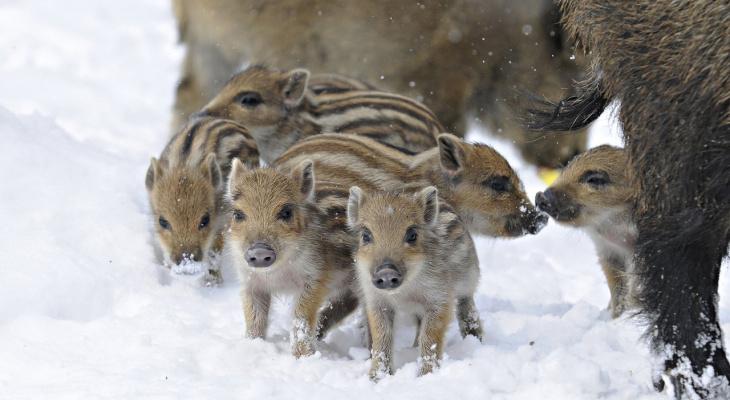 «Самооборона исключена»: браконьеры-аморалы разыскиваются в Пензе