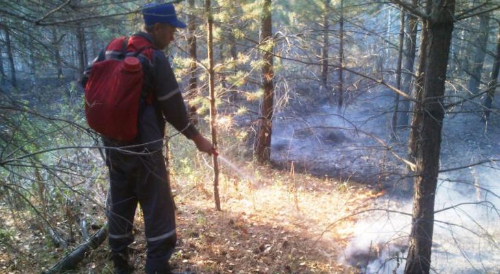 В Пензенской области потушили лесной пожар