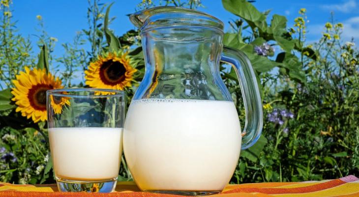Пензенцам рассказали, чем опасно коровье молоко