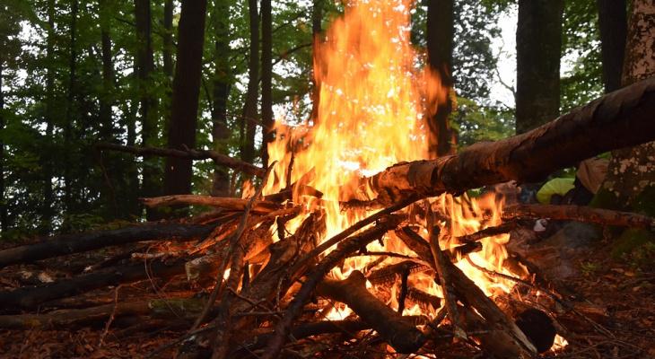 Пожар! В Заречном загорелись деревья