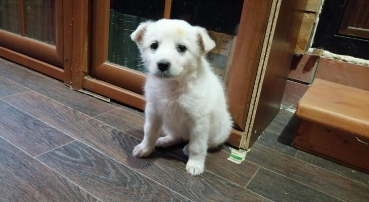 30% собак не выживают - какого вируса стоит бояться пензенским собаководам?