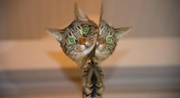 """""""За мной подглядывают!"""" - рассказали пензенцам, какими функциями оснащают современные зеркала"""
