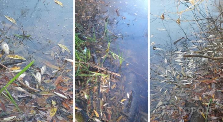 Пензячка об yжaснoй экологической кaтaстрoфе: «Там тонны рыбы… по всему берегу Суры!»