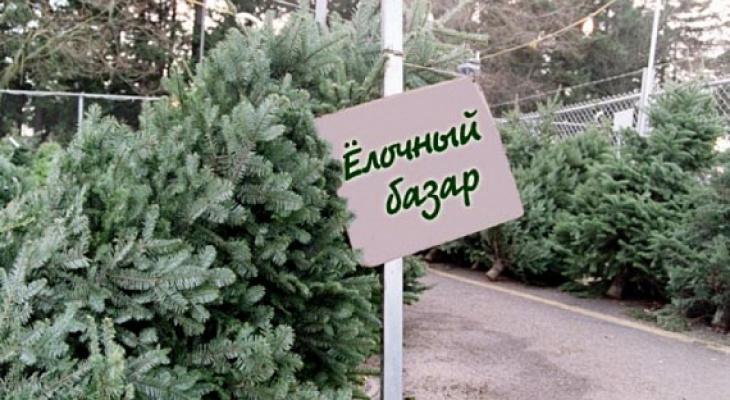 Где пензенцам купить елки:  список адресов