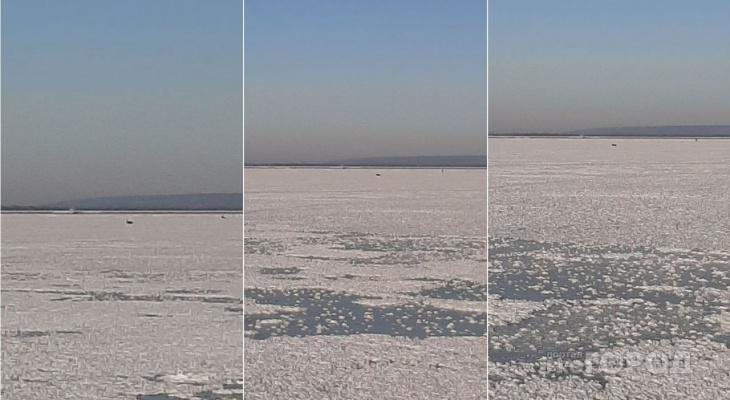 """""""Побегала немного и упала"""": пензенский рыбак рассказал о мучениях животного, застрявшего на льду"""