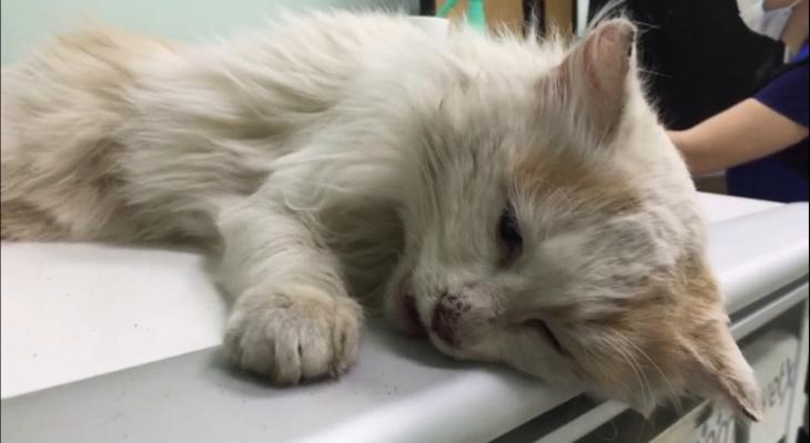 Состояние критическое! Пензенцев просят помочь коту с тяжелой судьбой
