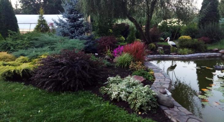 Дешево, красиво, просто: пензенцам раскрыли секреты ухоженного сада