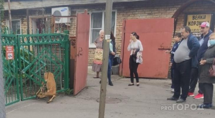 В заборе 44-ой пензенской школы застряла косуля