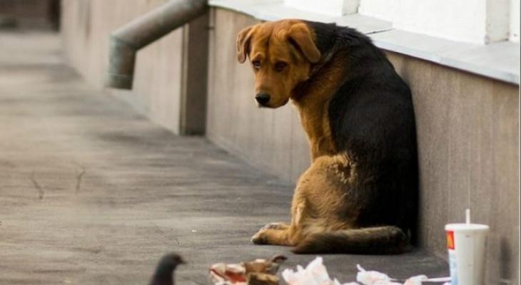 В Пензенской области планируют решить проблему с утилизацией трупов животных
