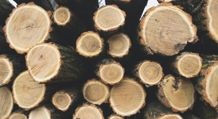 В Пензенской области незаконно вырубили лес на 763 тысячи рублей