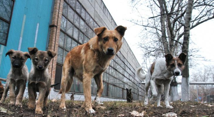 В Пензе прокуратура потребовала от чиновников принять меры по отлову бездомных животных
