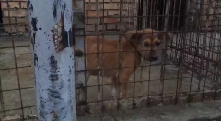 Пензячка сообщила о массовой гибели собак в питомнике