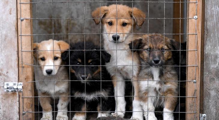 «Изымем и прооперируем»: в Пензенской области откроют приют для животных