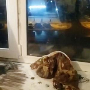 Мать выпавшей из окна в Пензе девочки покинула ее в трехмесячном возрасте – соцсети