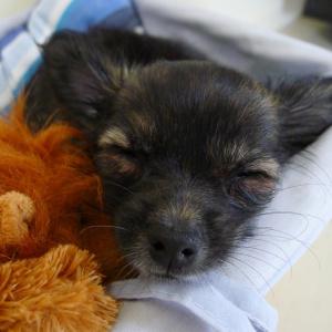 Простые советы, как пензенцу выбрать щенка в дом