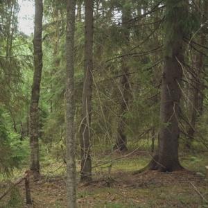 В Пензенской области прекращены поиски 80-летнего мужчины